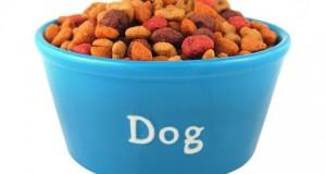 en mascotaplanet encontrarás comida para perro barata y de buena calidad