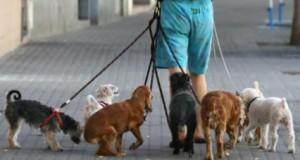 cuidadores de perros 2